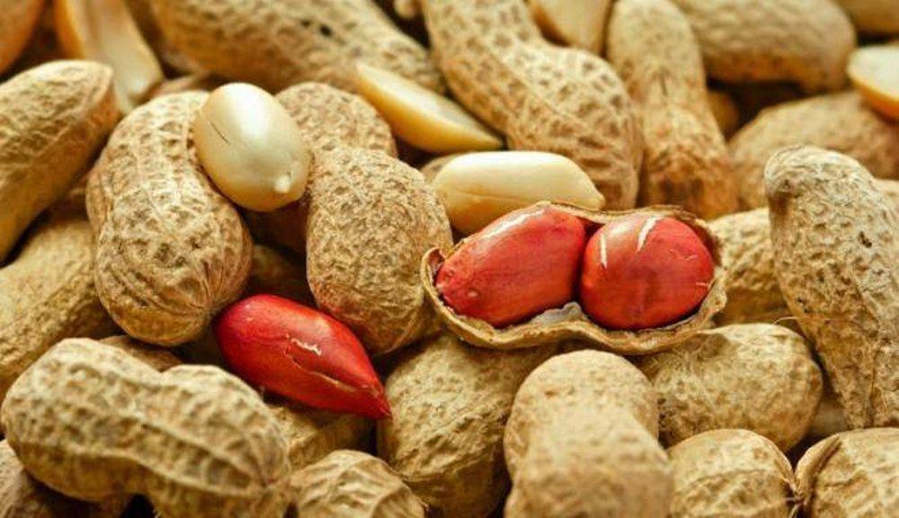 kacang tanah sebabkan asam urat