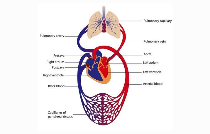 sirkulasi darah tidak lancar
