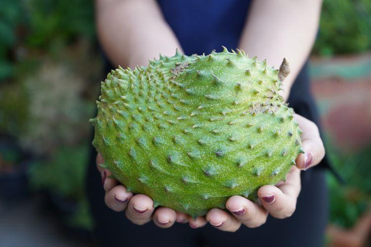 buah rematik untuk rematik
