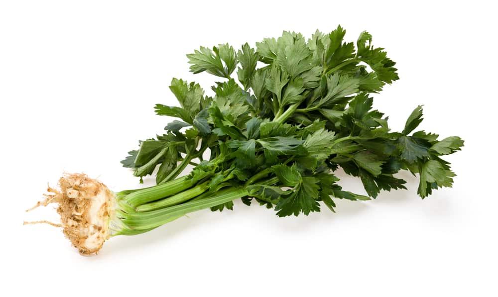daun seledri untuk kolesterol